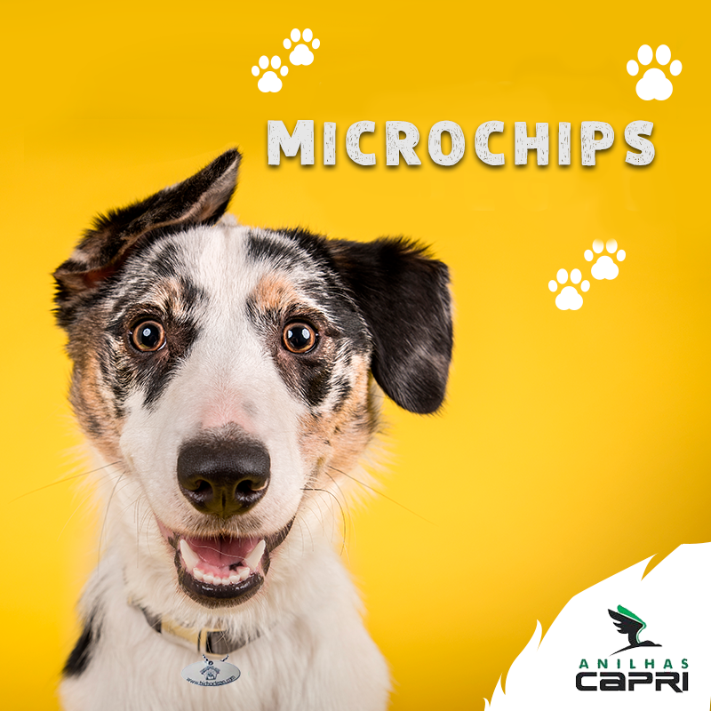 https://anilhascapri.com.br/categoria/kits-de-microchips